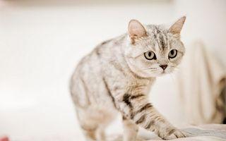 Бесплатные фото кот,котенок,шерсть,окрас,полоски,порода,усы