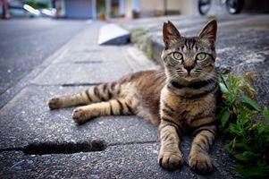 Фото бесплатно кот, уличный, взгляд