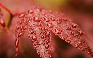 Бесплатные фото листья,вода,капли,роса,лес,зелень,растение