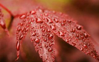 Фото бесплатно листья, вода, капли