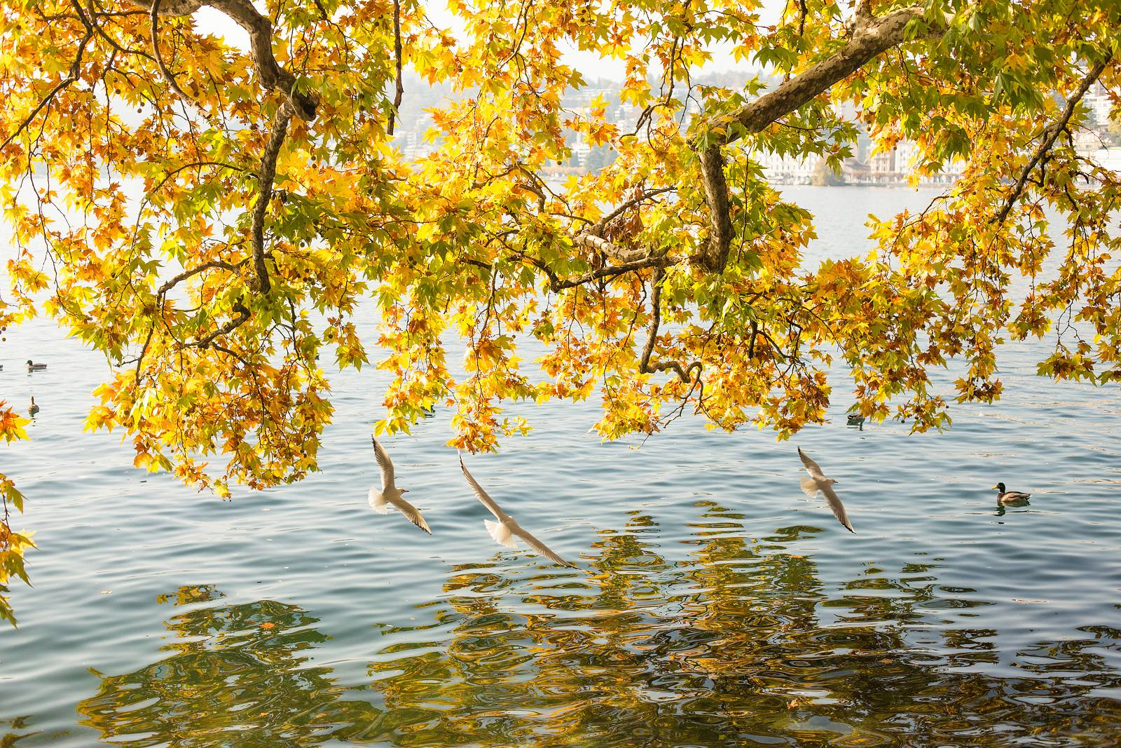 Лугано, Швейцария, осень