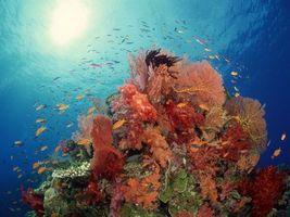 Фото бесплатно море, риф, кораллы