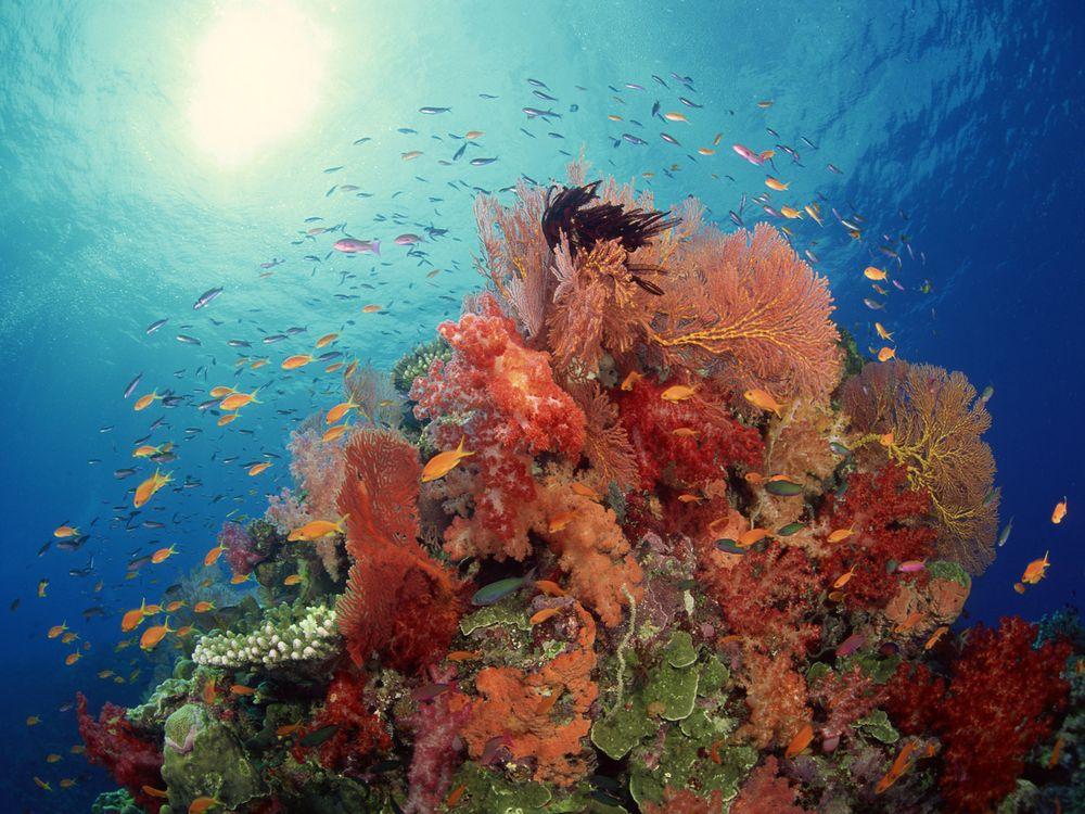 Фото бесплатно море, риф, кораллы, водоросли, рыба, косяк, подводный мир, подводный мир