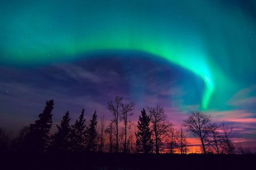 Photo free night, aurora borealis, forest