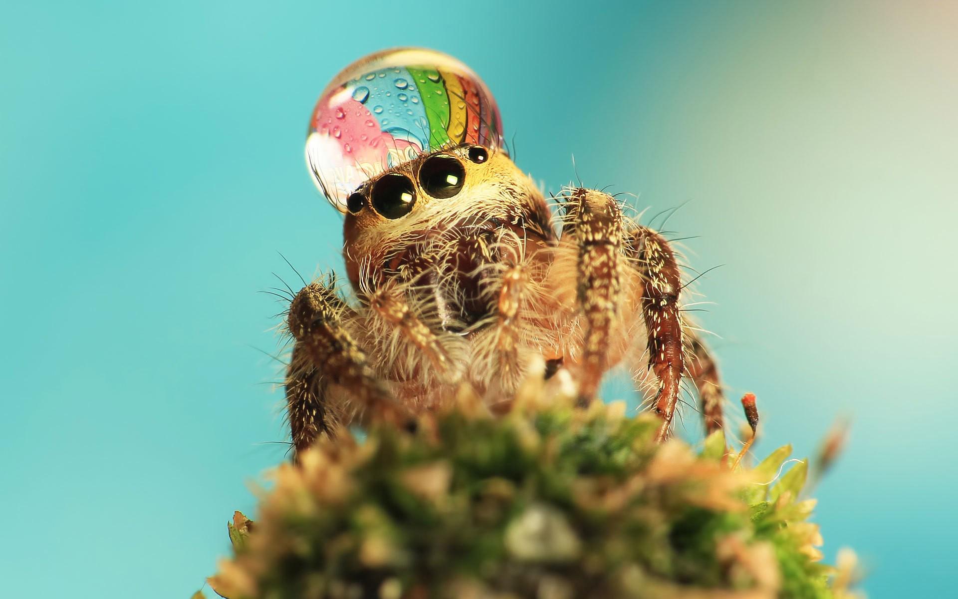 паук, глаза, капля