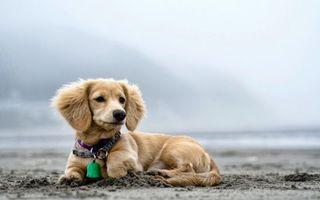 Фото бесплатно пес, щенок, пляж
