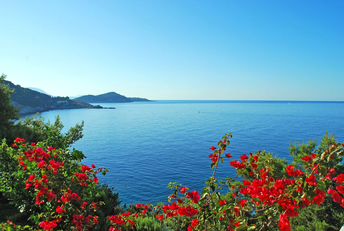 Фото пейзаж море цветы