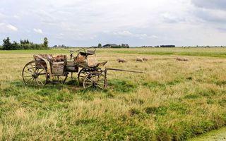 Бесплатные фото поле,пастбище,карета,овечки,деревья,строение,разное