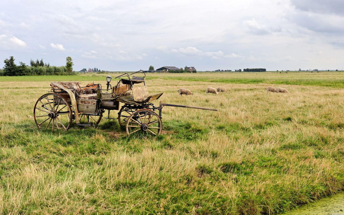 Фото бесплатно поле, пастбище, карета, овечки, деревья, строение, разное, разное