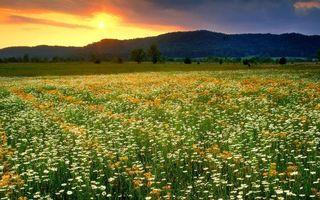 Фото бесплатно горы, солнце, поле