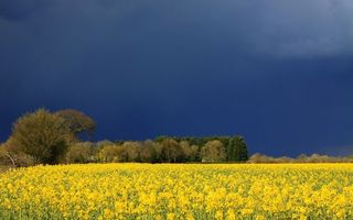 Фото бесплатно синий, небо, деревья