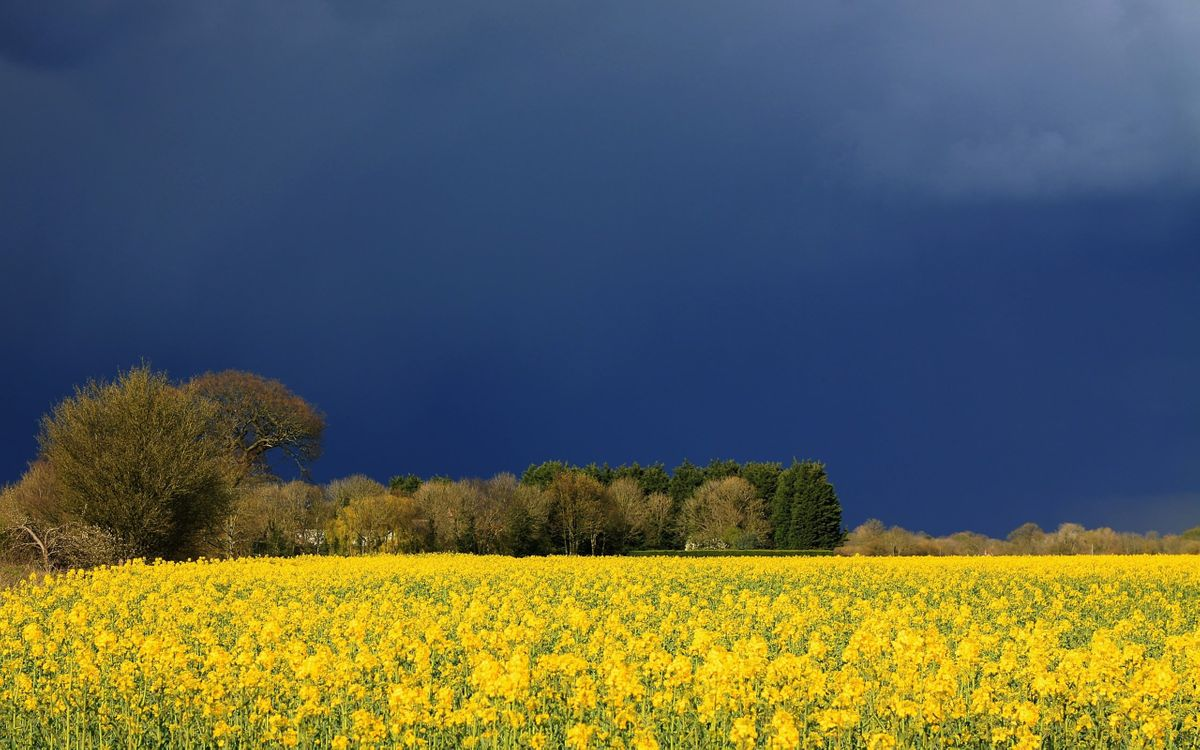 Фото бесплатно синий, небо, деревья - на рабочий стол