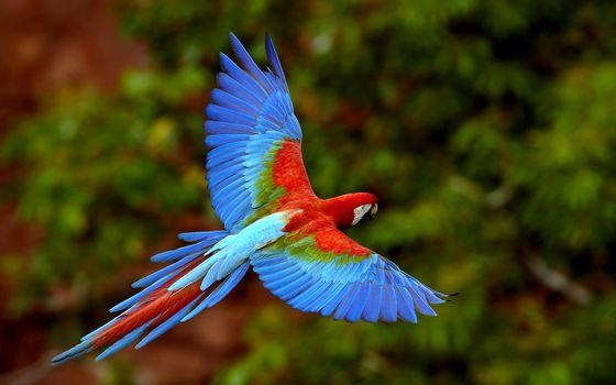 Бесплатные фото попугай,яркий,летит,деревья,крылья,клюв,птицы