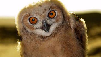 Бесплатные фото сова,глаза,красные,клюв,перья,крылья,птицы