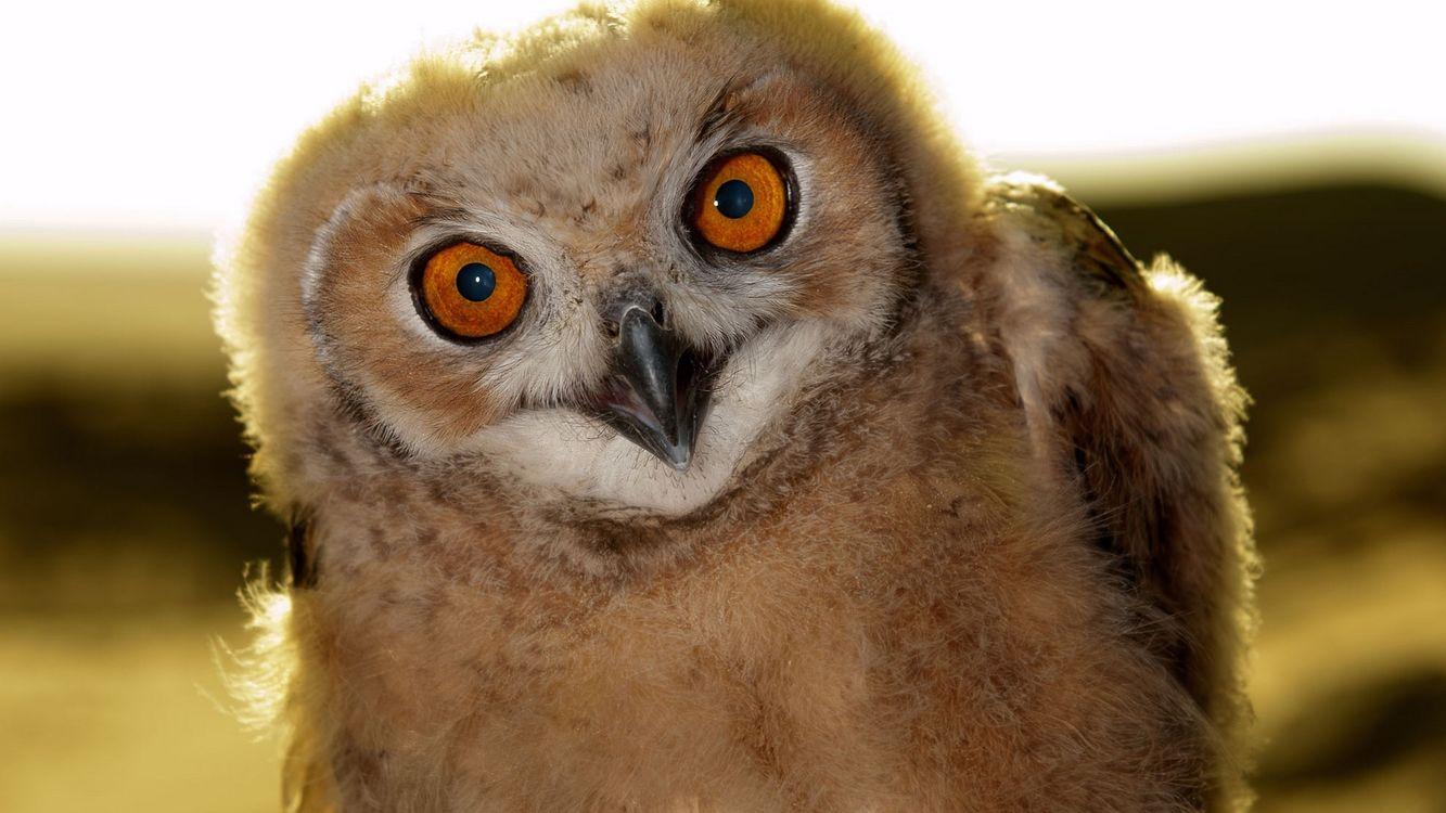 Фото бесплатно сова, глаза, красные - на рабочий стол