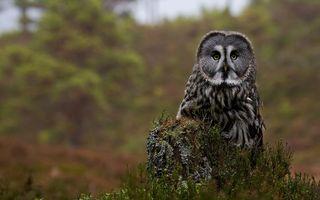 Фото бесплатно сова, филин, перья, крылья, пень, кора, окрас, глаза, птицы