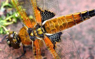 Бесплатные фото стрекоза,крылья,глаза,рисунок,хвост,панцирь,голова