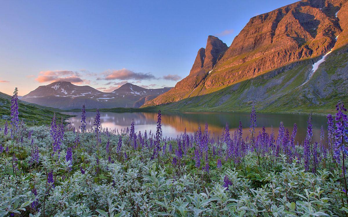 Фото бесплатно цветы, река, трава, горы, небо, горизонт, природа, природа