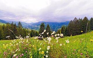Заставки цветы, трава, луг, елки, иголки, горы, пейзажи, природа