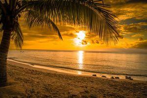 Бесплатные фото закат,море,пляж,пальма,берег,пейзаж