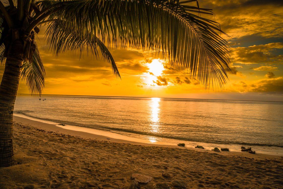 Фото бесплатно закат, море, пляж, пальма, берег, пейзаж, пейзажи
