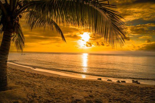 Photo free palm, landscape, beach
