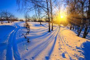 Бесплатные фото зима,закат,снег,лес,деревья,сугробы,лыжня
