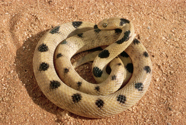 Фото бесплатно животные, змія, пісок, разное - скачать