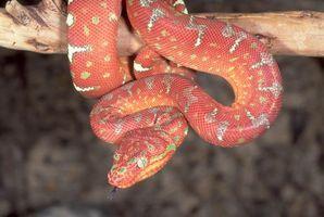 Бесплатные фото животные, змія
