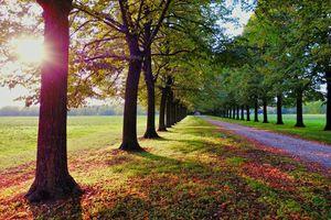 Фото бесплатно аллея, деревья, солнце