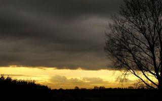 Фото бесплатно деревья, темно, небо