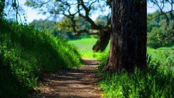 Фото бесплатно деревья, тропинка, трава, ветки, крона, листья, зелень, лето, тепло, природа, пейзажи