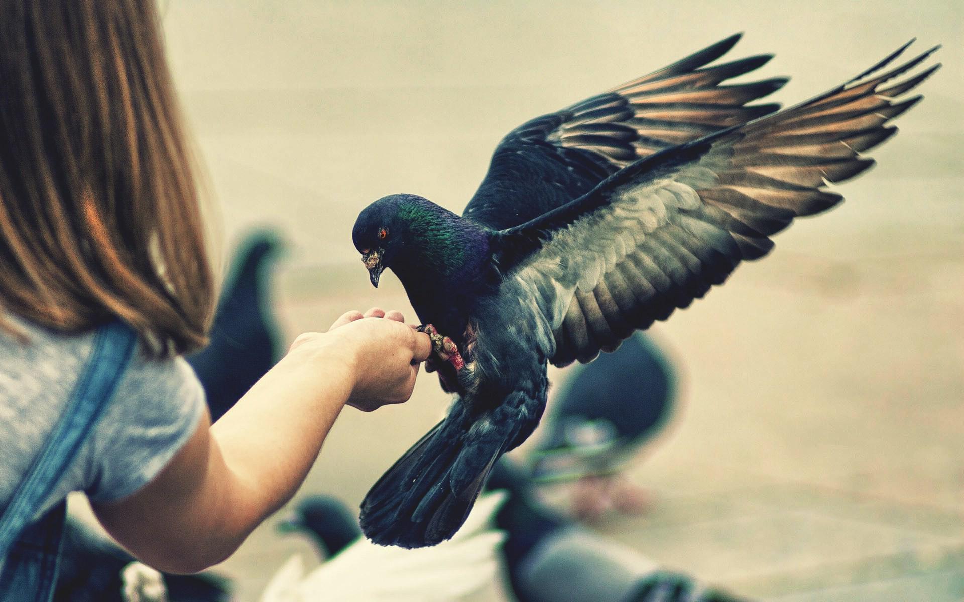 девочка, кормит, птицу