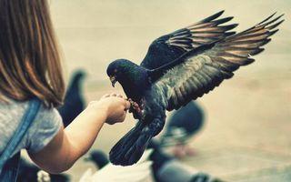 Бесплатные фото девочка,кормит,птицу,голубь,крылья,перья,лапы