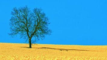 Бесплатные фото дерево,поле,небо,синьо-жовтий,пейзаж,пейзажи,природа
