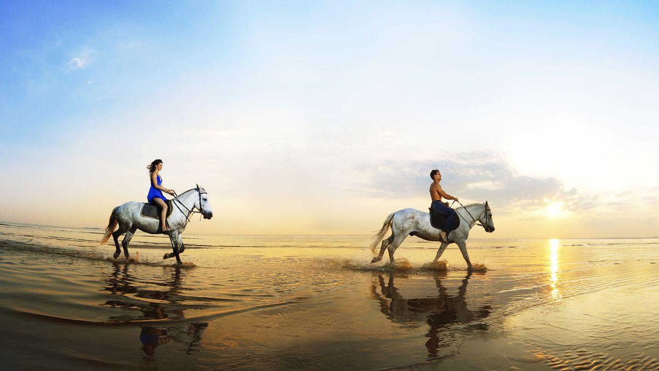 Фото бесплатно кони, всадники, берег, море, небо, солнце, разное, разное