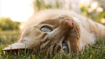 Заставки кот, кошка, природа