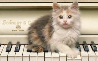 Фото бесплатно котенок, пианино, морда