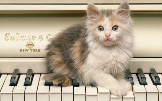 Заставки котенок, пианино, морда