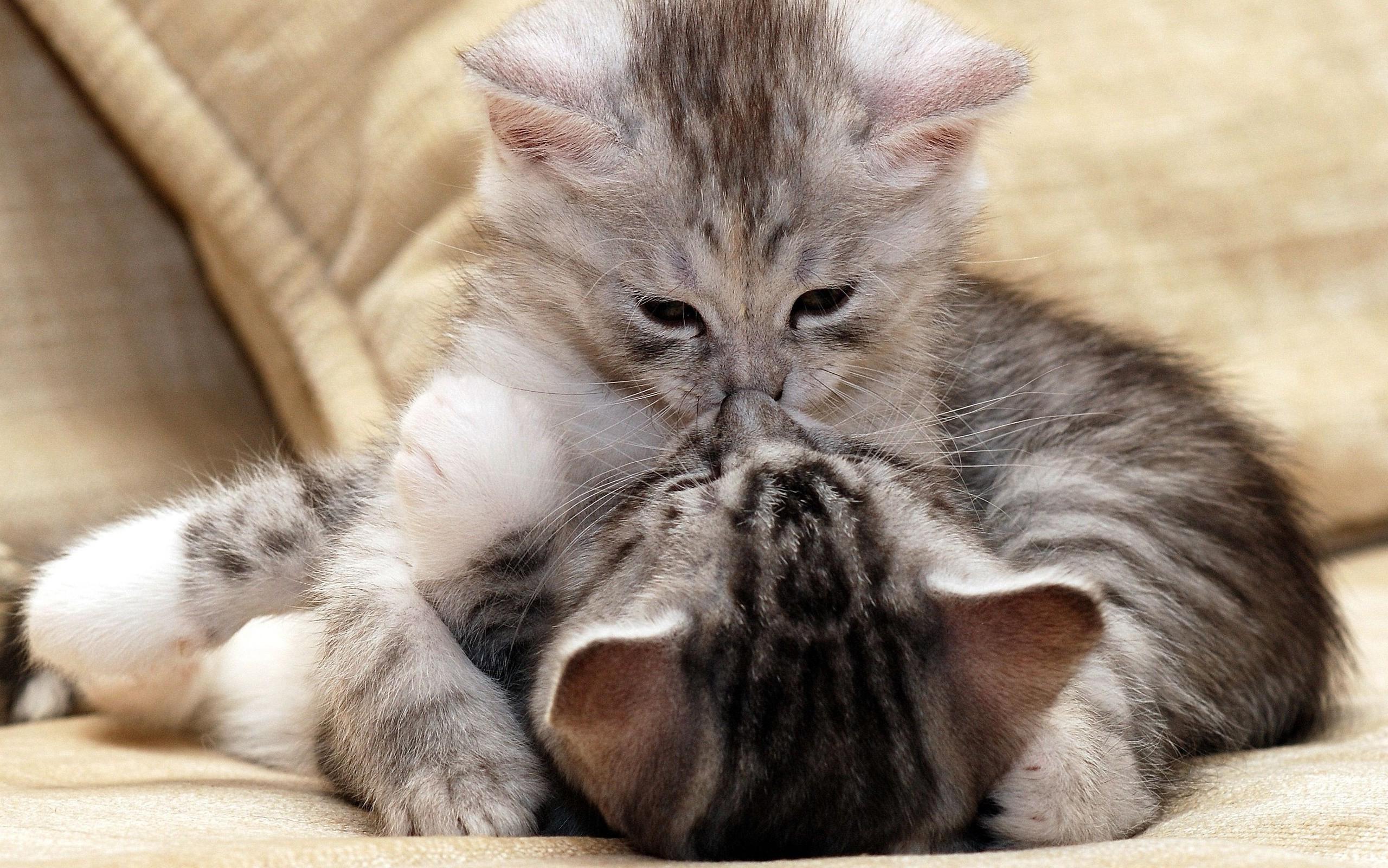 котики, котята, маленькие
