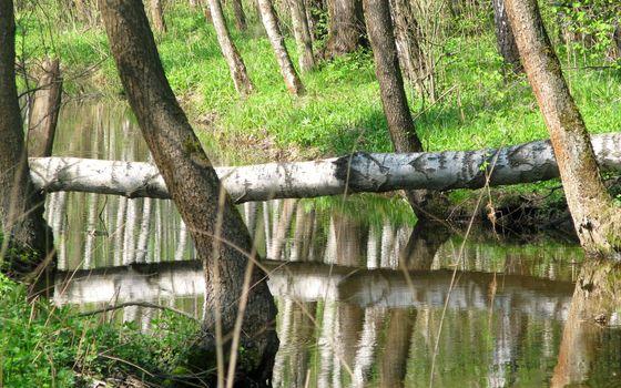Photo free nature, birch, bark