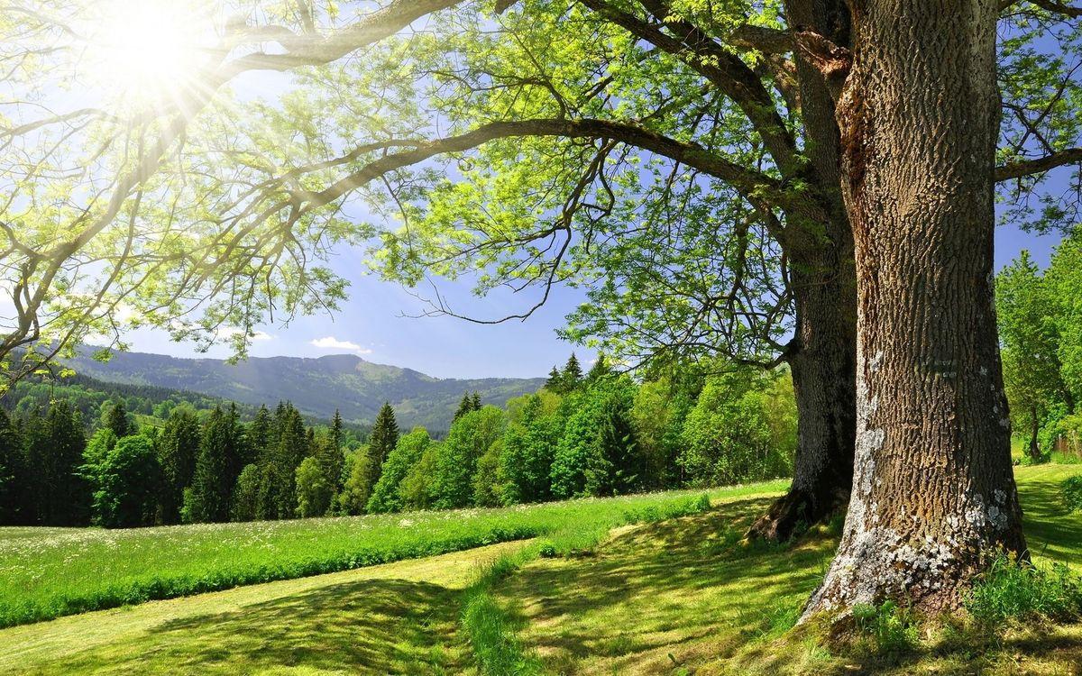 Фото бесплатно лето, дерево, лучи, солнце, трава, горы, холмы, пейзажи, пейзажи