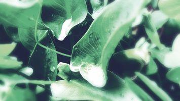 Бесплатные фото листья,влага,капли,роса,зелень,вода,природа