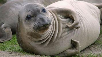 Фото бесплатно млекопитающие, животное, глаза