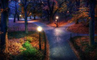 Фото бесплатно ночь, фонари, листья