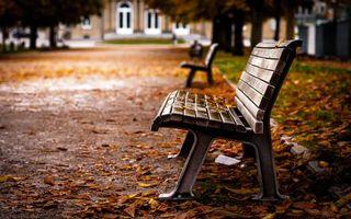 Бесплатные фото осень,парк,тротуар,скамейки,листь,деревья,природа