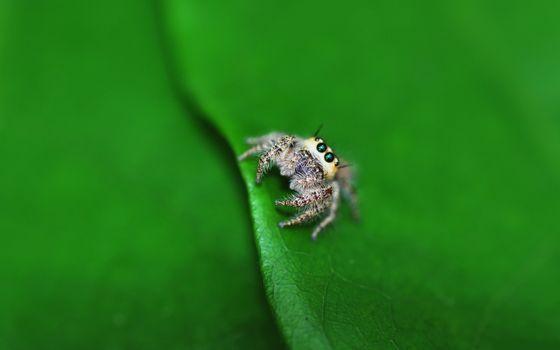 Бесплатные фото паук,маленький,глаза,лапки,листик,насекомые