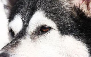 Бесплатные фото пес,щенок,глаза,голова,шерсть,порода,окрас