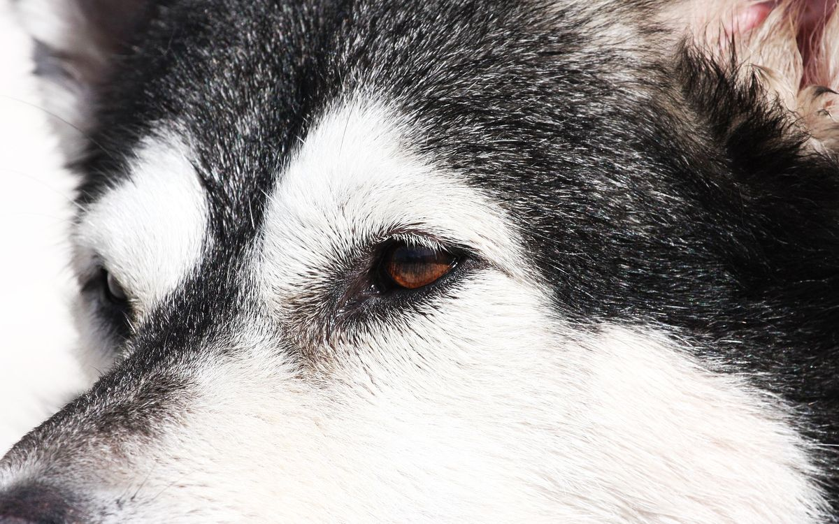 Photos for free photo, eyes, breed - to the desktop