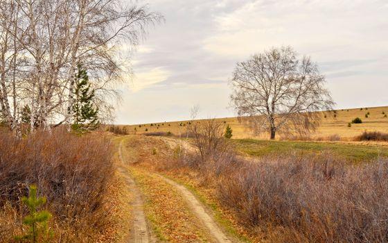 тропинка, дорога, березки, кусты, осень